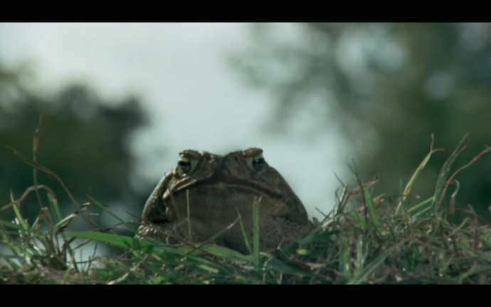 frogstill-toad looks out