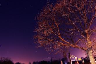 tree-715271_640