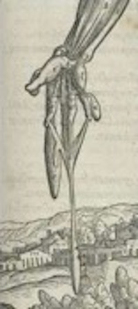 Illustration from Vesalius's De humani corporis fabrica