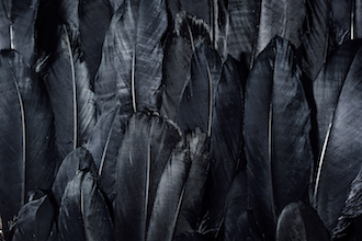 boss-fight-free-high-quality-stock-images-photos-photography-feathers-black