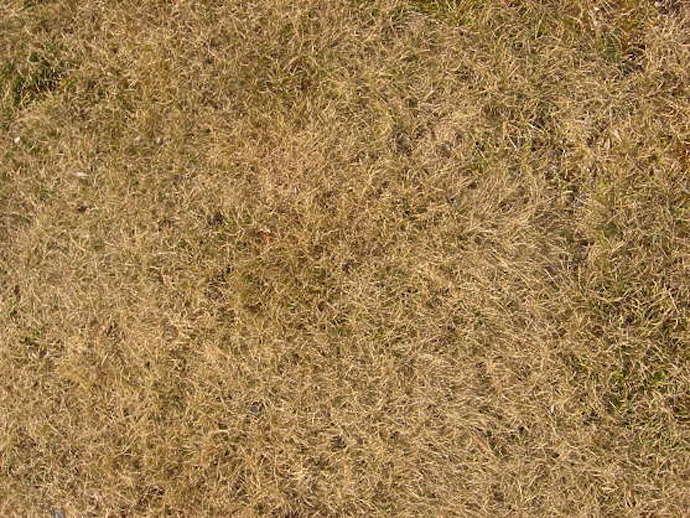 grass-dead