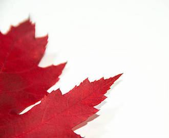 close up red maple leaf